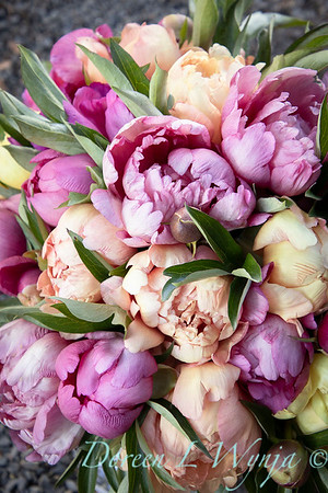 1958 Peaonia 'Singing in the Rain' - 5259 Peaonia x 'Smith Opus 2' Takara cut flowers_1065