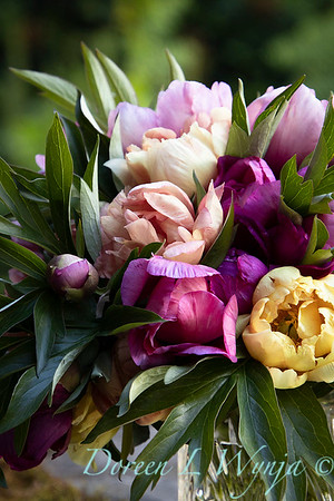 1958 Peaonia 'Singing in the Rain' - 5259 Peaonia x 'Smith Opus 2' Takara cut flowers_1054
