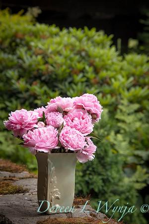 Paeonia lactiflora 'Sarah Bernhardt - Peony cut flowers_1199