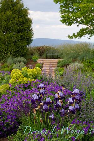 Iris 'Visual Intrigue' - Geranium × magnificum 'Rosemoor' - Euphorbia blue landscape_1072