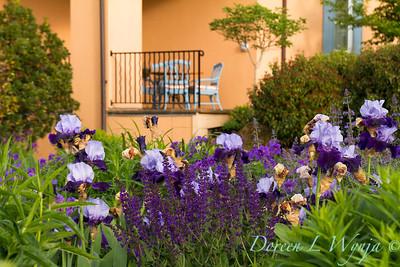 Salvia - Iris 'Visual Intrigue'_1096