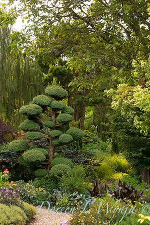 Northwest Garden Nursery_082