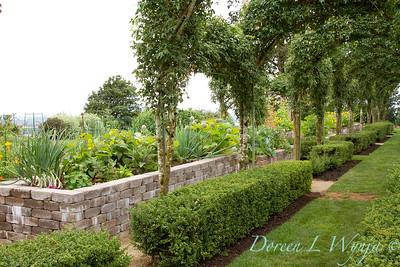 Laburnum watereri Vossii arbor - formal vegetable garden_032