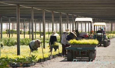 Visalia Can Yard_0545