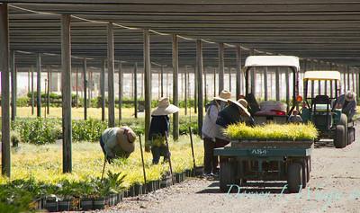 Visalia Can Yard_0544