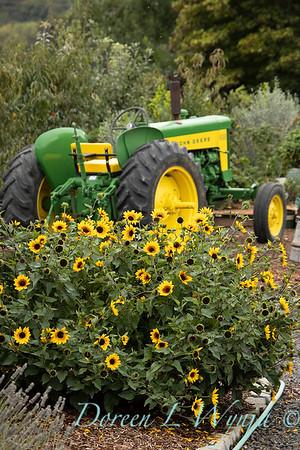 43002 Helianthus x annuus 'TMSNBLEV01' SunBelievable farm tractor landscape_2554