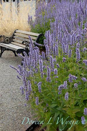 Agastache 'Blue Fortune' landscape garden bench_1328