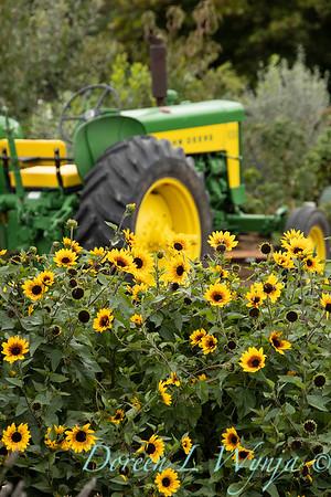 43002 Helianthus x annuus 'TMSNBLEV01' SunBelievable farm tractor landscape_2559
