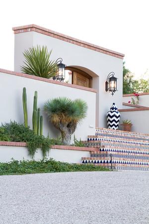Yucca rostrata_002SUN
