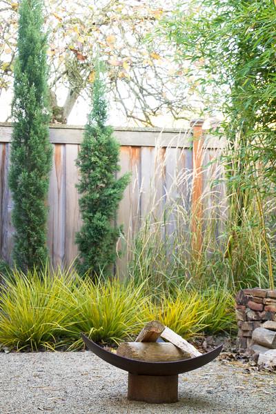 Cupressus sempervirens - Libertia ixioides Goldfinger - outdoor living fire pit_1003