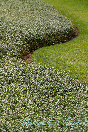 Groundcover_1893