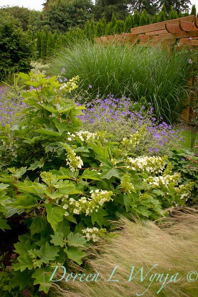 Geranium Hydrangea oak leaf_0449