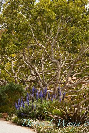 Echium Mediterranean landscape_7203