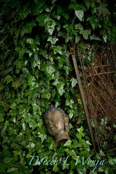 Ivy n Buddha head_7516