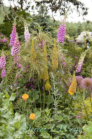 Cottage garden5496