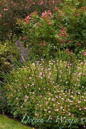 Cottage garden _7013