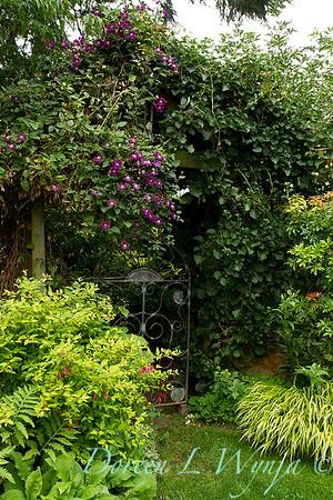 Clematis jackmanii arbor - Fuchsia genii 'Aurea' - garden gate_7607
