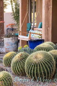 Echinocactus grusonii front porch swing_2593