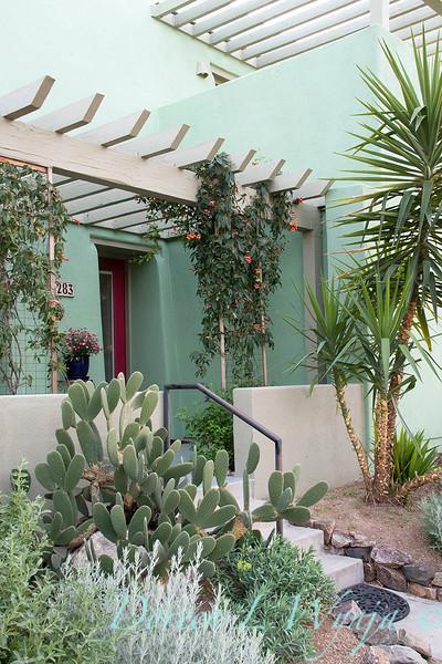 Bignonia capreolata 'Tangerine Beauty' trellised southwest entry garden_7905