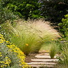 Nassella tenuissima - Senecia greyii - Stone pathway_Doreen Wynja_691