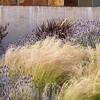 Nassella tenuissima_Doreen Wynja_030
