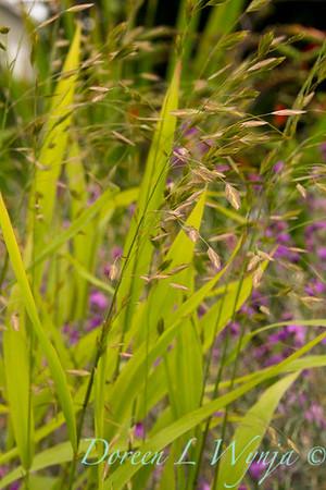 Chasmanthium latifolium_Doreen Wynja_034
