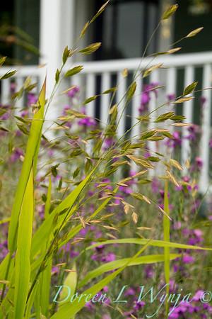 Chasmanthium latifolium_031