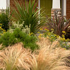 Nassella tenuissima Stipa Mexican Feather Grass_Doreen Wynja_001