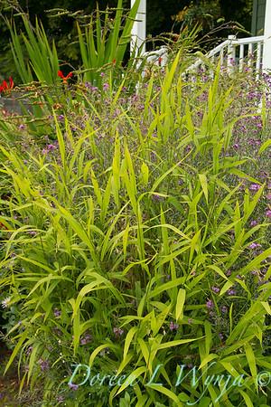 Chasmanthium latifolium_030