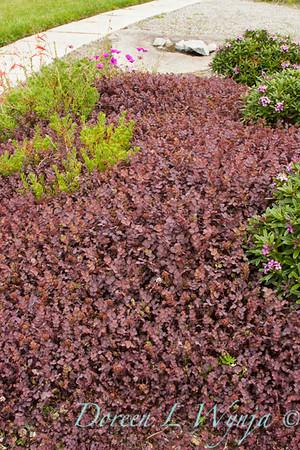 Aceana inermis Purpurea_1991