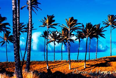 Hawaii_3-06_153_20X