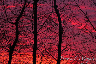 Fire in the sky Sunset_0119