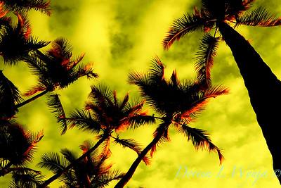 Hawaii_11-18-05_009_20x