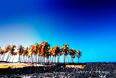 Coconut Grove_043_20x