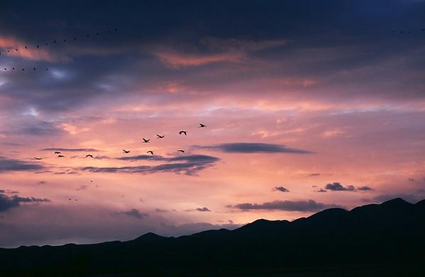 New Mexico - Bosque del Apache