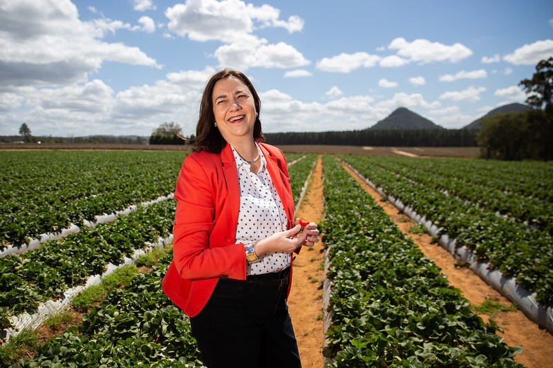 Annastacia Palaszczuk Premier of Queensland at Pinata Strawberry Farm. Brisbane 21 Sept 2018. Photo: Attila Csaszar