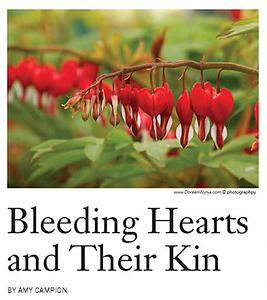 Bleeding Hearts The American Gardener JF20_Page_1C