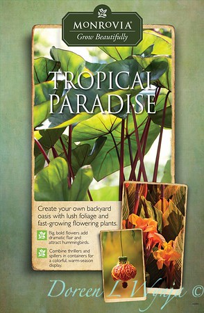 Images used on posters for Monrovia PR, Grow Beautifully