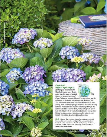 Garden Gate - full page image 11-2020 issue AM