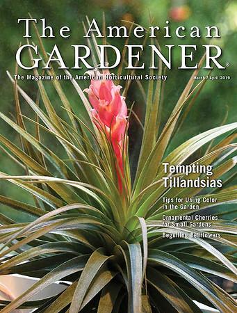 Tillandsia stricta on the cover of The Amercian Gardener, April 2019