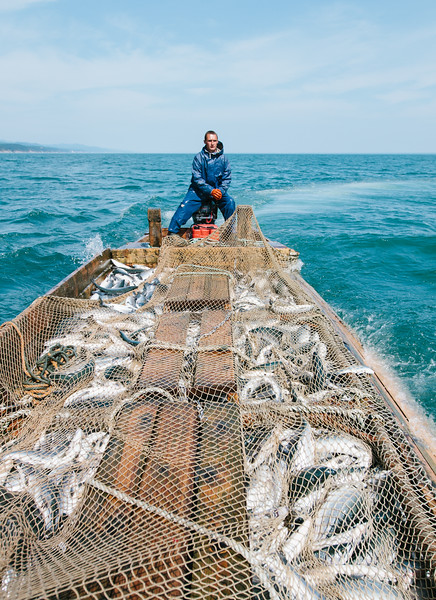 Northeast Sakhalin Coastal Pink Salmon Fishery
