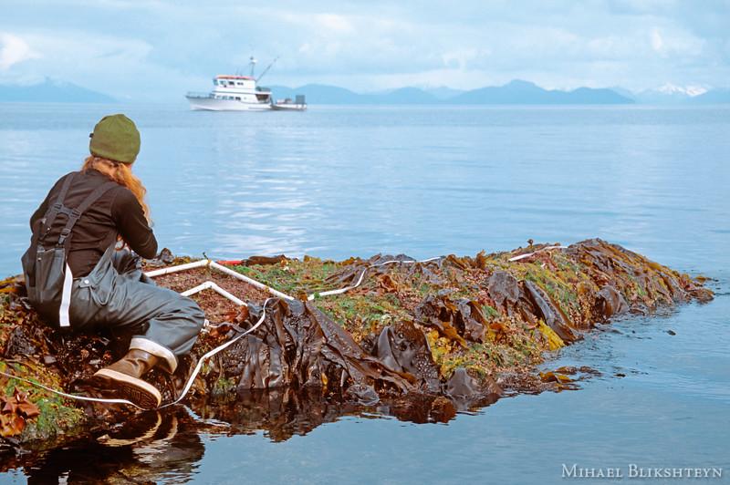 Graduate student sampling the intertidal