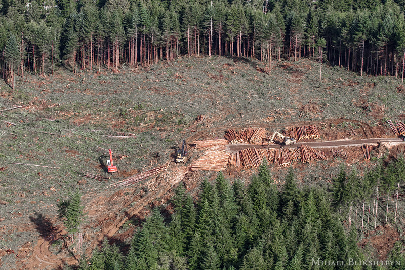 Clearcutting hillsides of the Olympic Peninsula