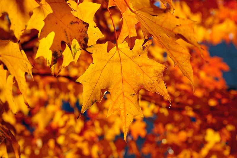 A leaf in fall