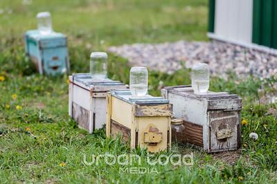Bees_01©UTM2017