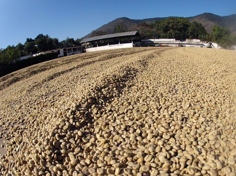 January 14, 2013 - Cafe Campesino led a group of travelers around Guatemala to learn more about fair-trade coffee and other cooperative efforts in the region. Pictured here are coffee beans laid out to dry in the sun at the Coffee Museum in Antigua, Guatemala. Prior to packaging and shipping, coffee beans must first meet exacting moisture measurements. By drying the coffee beans in the sun, coffee growers ensure that moisture levels are met.