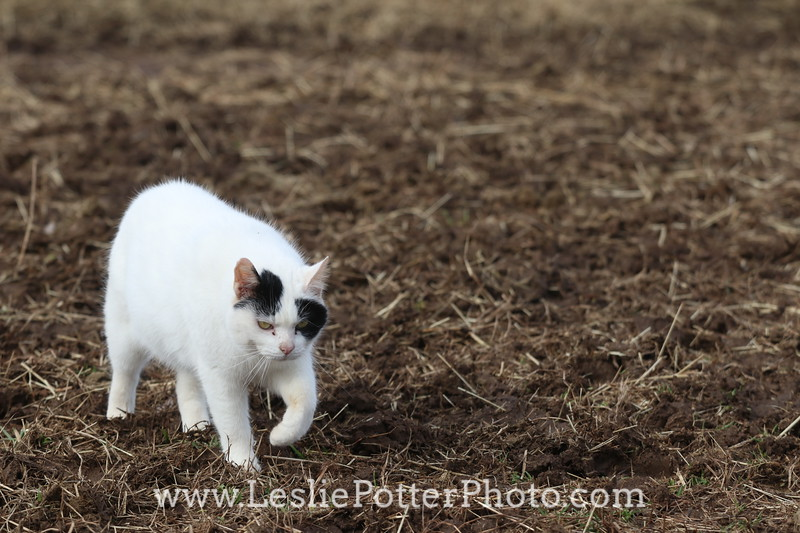 White Cat in the Mud