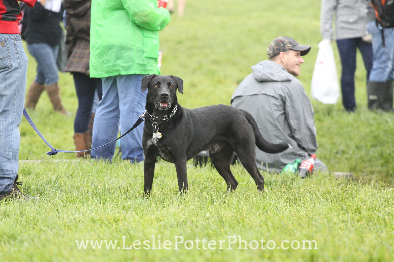 2016 Rolex Kentucky Three-Day Event