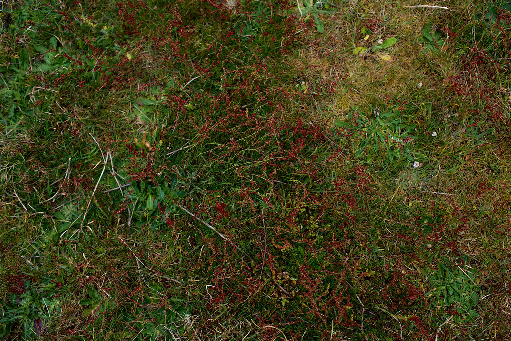 Nature_Forager_photographer0078