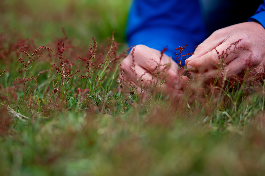 Nature_Forager_photographer0024